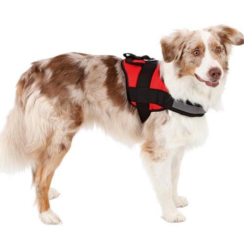 Hondenharnas Maestro -  comfortabele pasvorm.