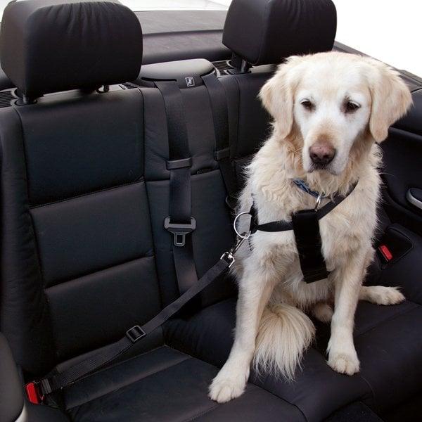 Veiligheidsgordel Hond | Inclusief verbindsingsstuk