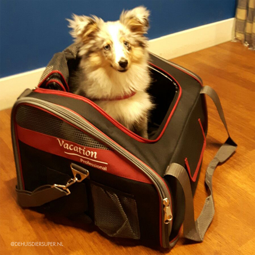 Autotas Vacation   Deze hond is er klaar voor om mee op reis te gaan