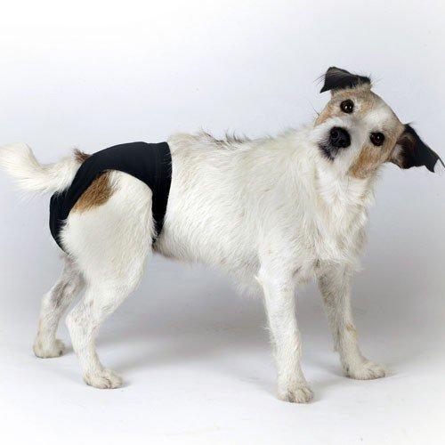 Hondenkleding | Loopsheid Broekje in 6 maten