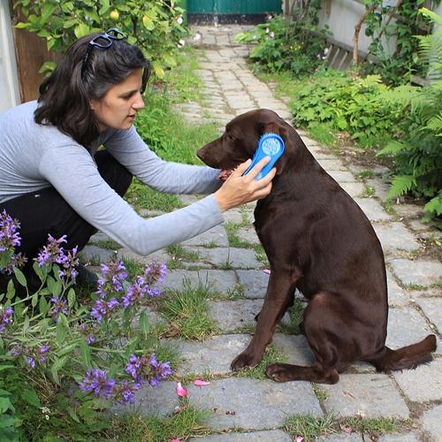 Magische Hondenborstel | Magic Brush