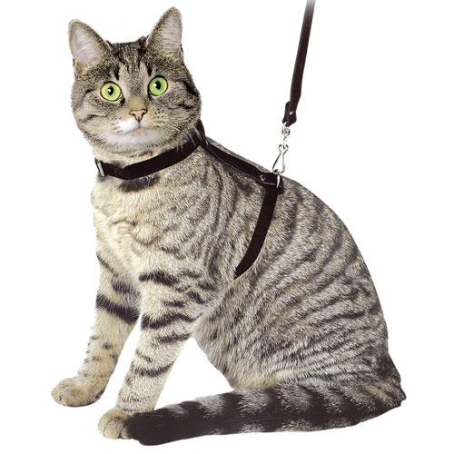 Kattentuigje Benji zwart - Inclusief looplijn 120cm