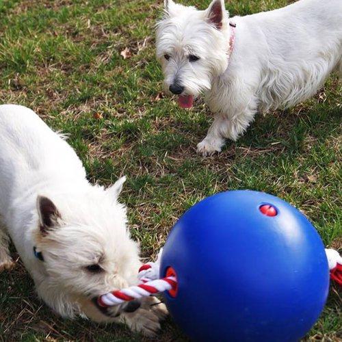 Hondenspeelgoed | Tuggo Onverwoestbare Hondenbal Blauw