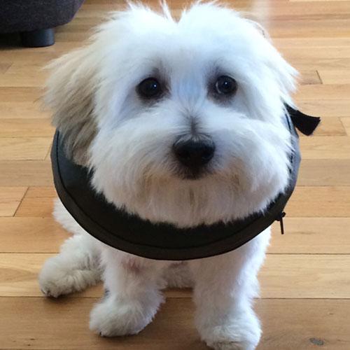 Hondenkraag | Comfy Collar | Opblaasbare kraag voor hond en kat
