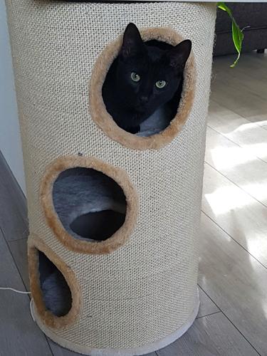 Krabton bubba | Tevreden kat met zijn krabton bubba beige