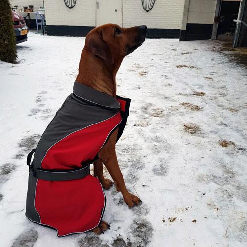 Softshell Hondenjas Lathi | Hond kaya in de sneeuw