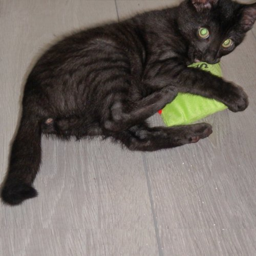 Kattenspeelgoed | Speelzak met extra veel catnip