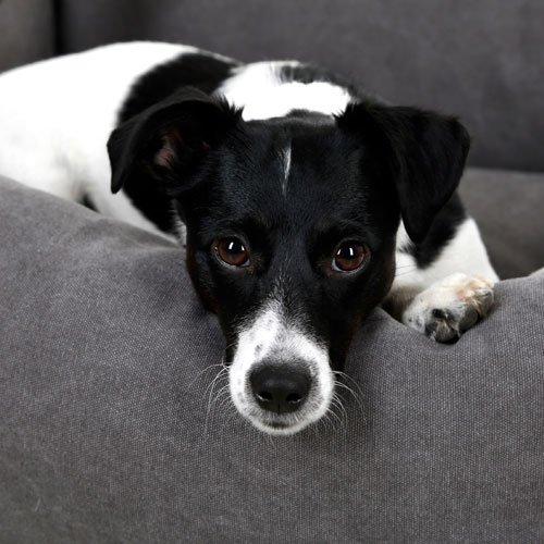 Hondenmand Lucca Grijs