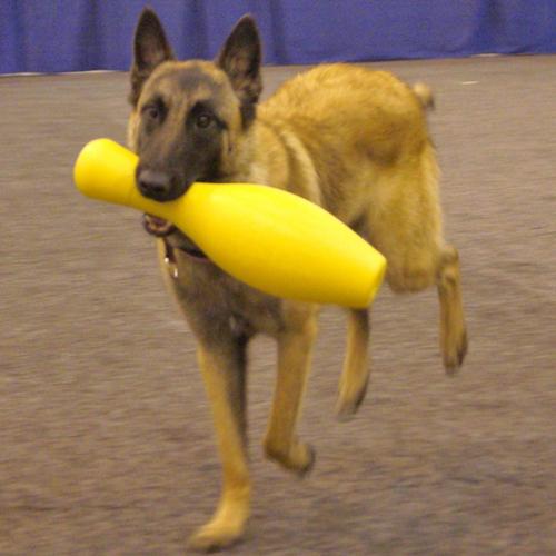 Hondenspeelgoed   Tuggo Shake N Fetch getest in dierentuinen