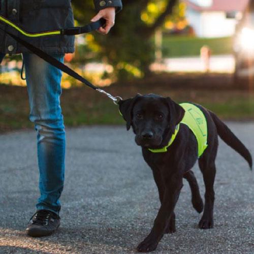 Honden veiligheidsvest - Veiligheidsvest voor de hond