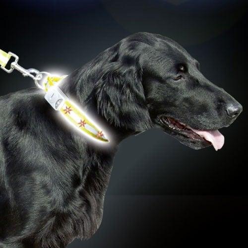 Reflecterende Hondenhalsband Zichtbaar tot 300 meter !