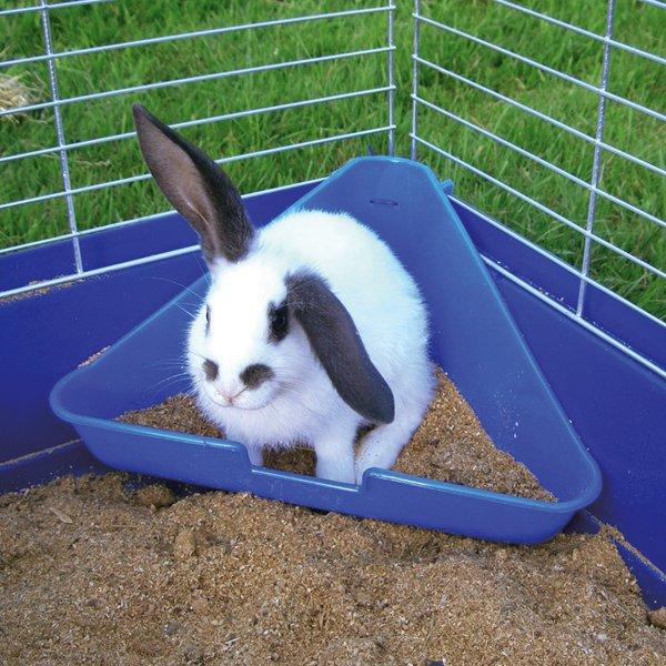 konijnen_toilet_hoek.jpg