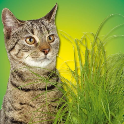 Kattengras voorziet in de natuurlijke behoefte van foliumzuur