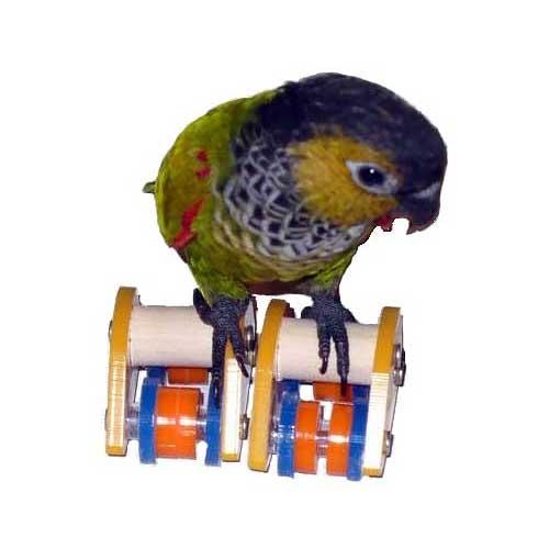 Rolschaatsen voor je papegaai | Zoo-Max
