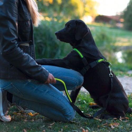 Reflecterende Hondenriem met LED verlichting