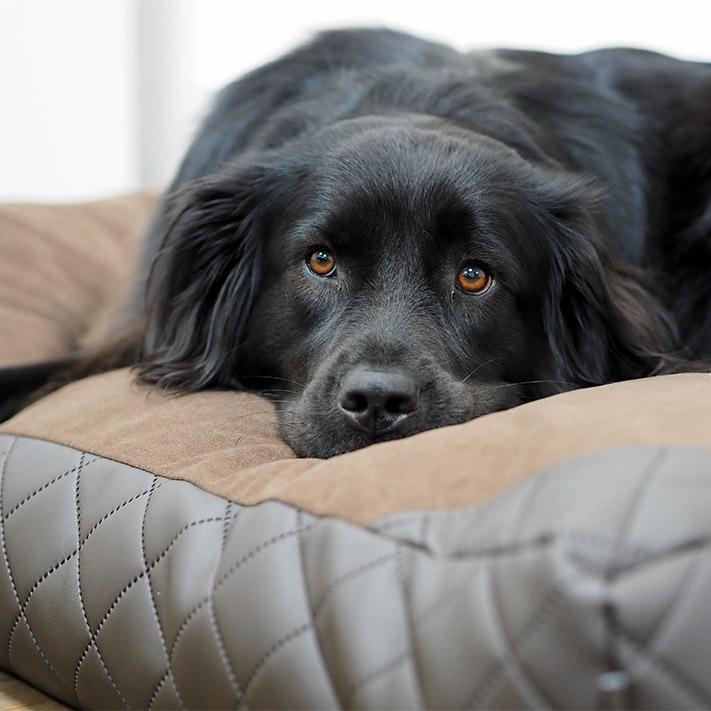 Hondenkussen Giulia