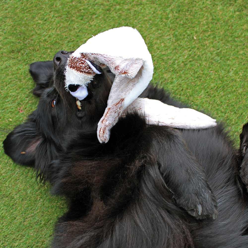 Hondenknuffel Forest