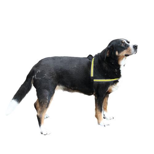 Hondentuigjes | Reflecterend Hondentuigje met LED licht